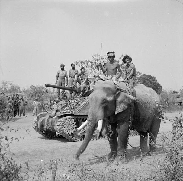The British commander and Indian crew of a Sherman tank of the 9th Royal Deccan Horse, 255th Indian Tank Brigade, encounter a newly liberated elephant on the road to Meiktila, 29 March 1945