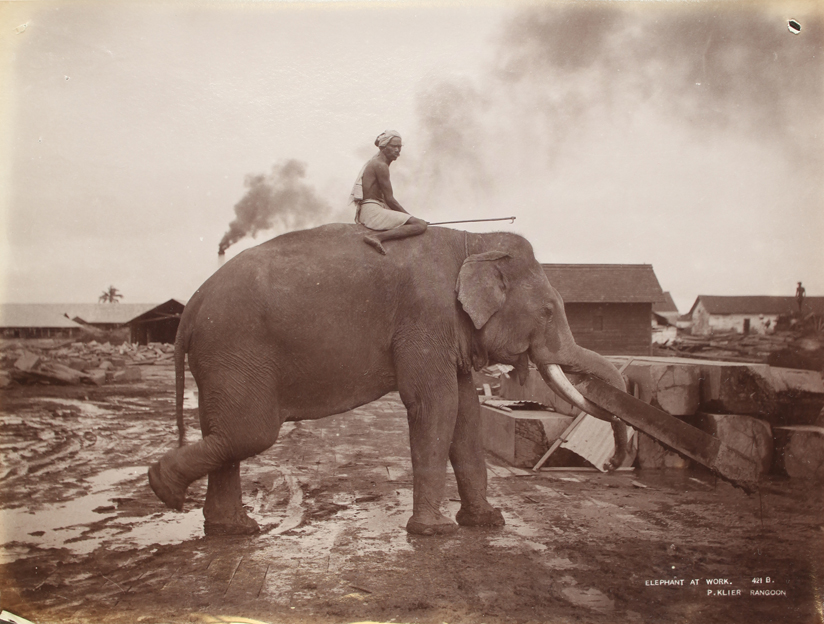 One of Philip Klier fantastic photographs of elephants working in one of Rangoon's timber yards taken in 1907.