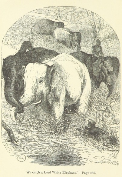 William Dalton, The White Elephant; or, the Hunters of Ava and the King of the Golden Foot (London: Griffith and Farran, 1888)