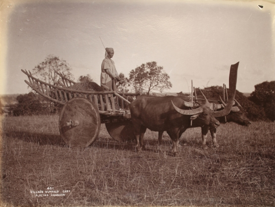 'Village Buffalo Cart', Philip Klier, 1907