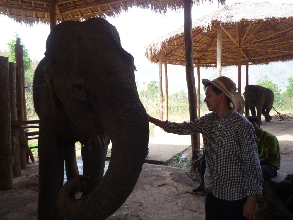 Me feeding an elderly female elephant, who was wary of accepting food from humans with her trunk because of some earlier traumatic experience.