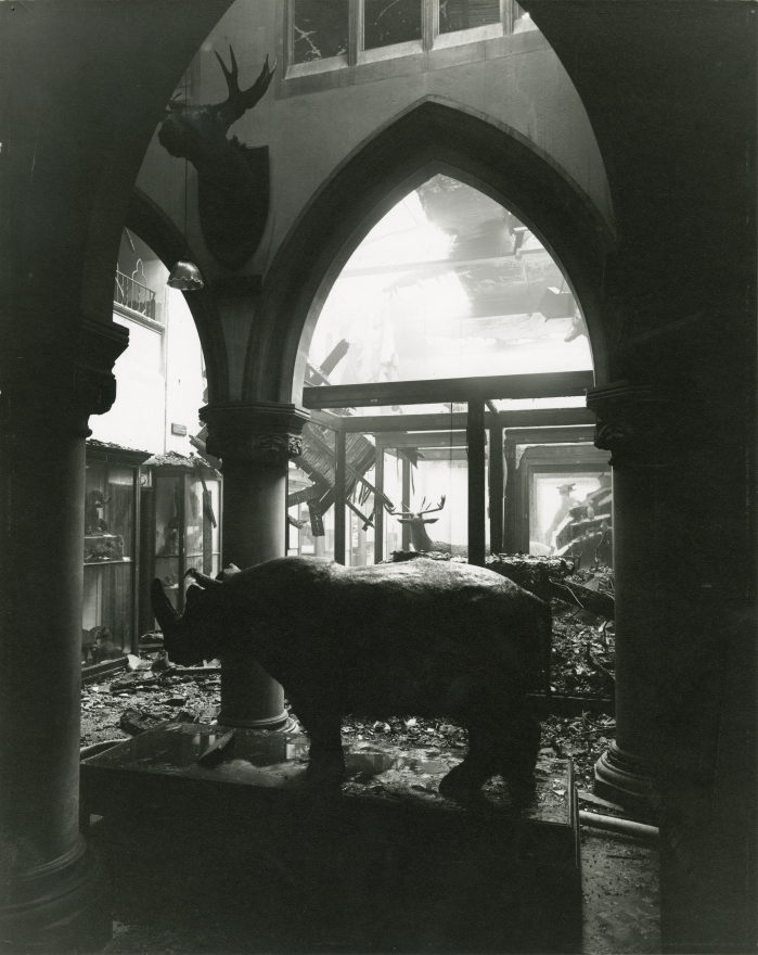 Jackson in the bomb damaged museum. (c) Bristol Museums, Galleries and Archives,