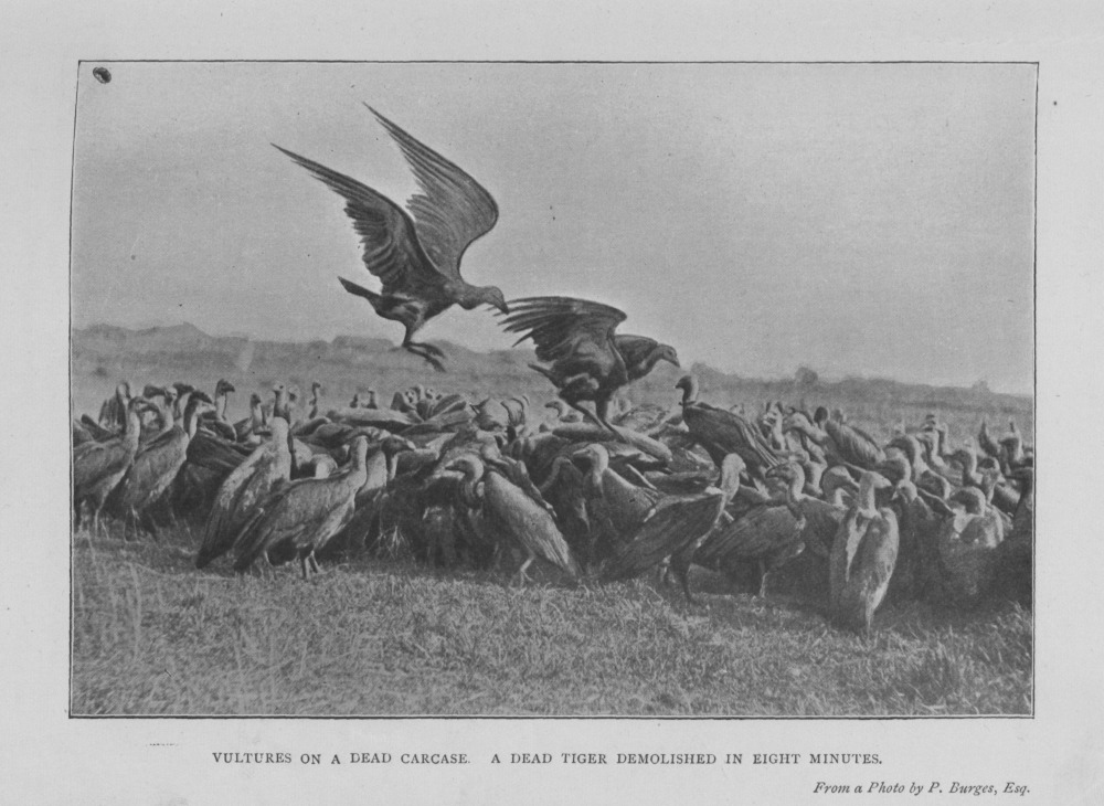 Source: F.W.T. Pollok and W.H. Thom, 'Wild Sports of Burma and Assam' (1900), p. 151