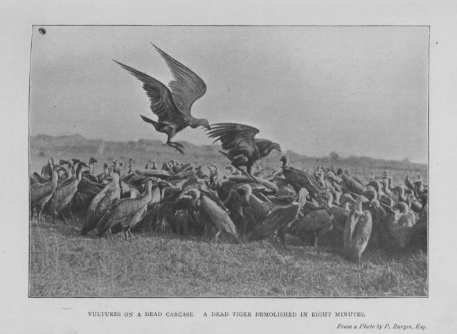 Source: F.W.T. Pollok and W.H. Thom, 'Wild Sports of Burma and Assam' (1900), p. 151