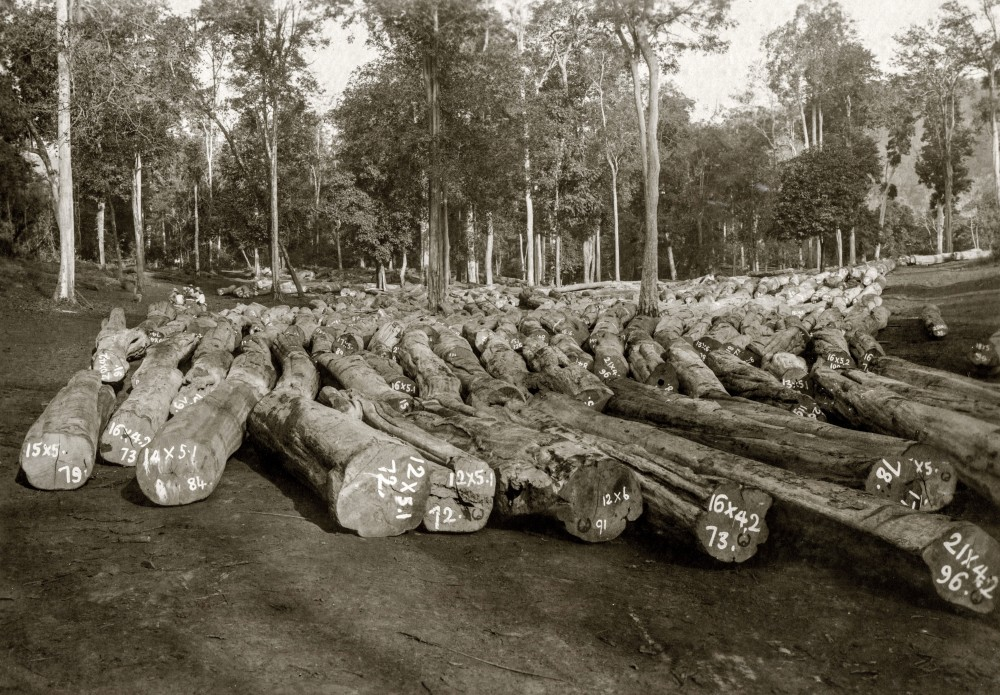 Logs at storing ground