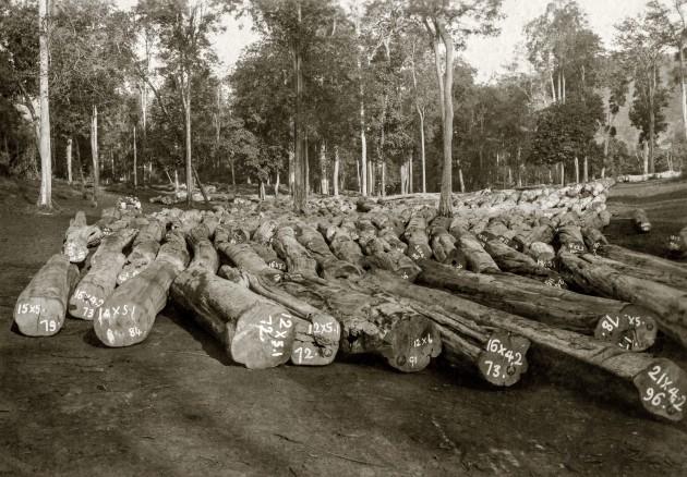 Logs at storing ground
