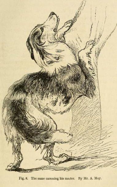 An affectionate dog