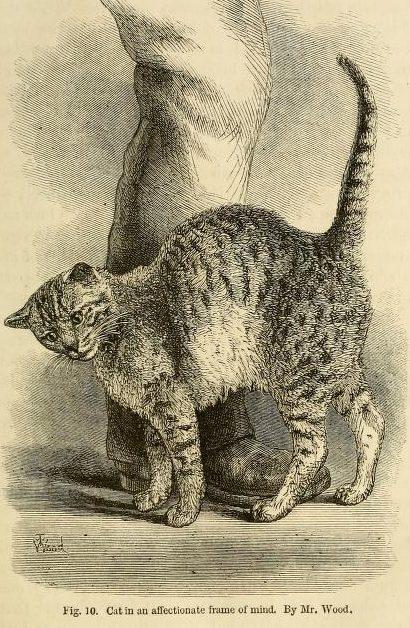 An affectionate cat