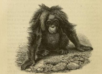 Alfred Russell Wallace, The Malay Archipelago: The Land of the Orang-Utan and the Bird of Paradise (New York, 1869)