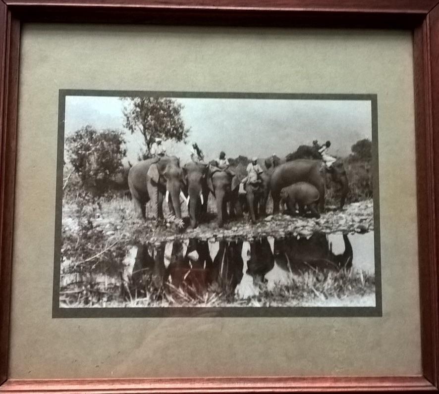 elephant-photograph1
