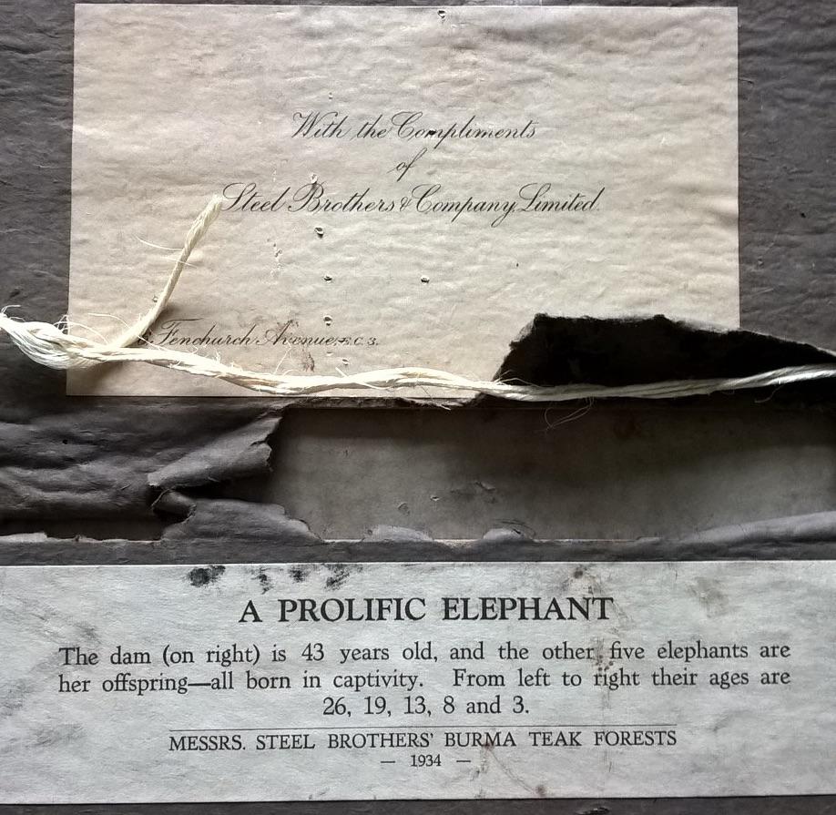 elephant-photograph2
