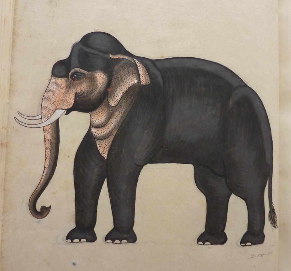 D.530-1901 Elephant