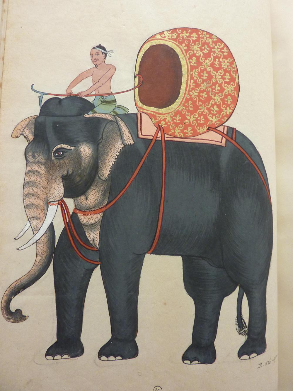 D.536-1901 The King's Elephant - His Majesty's favourite