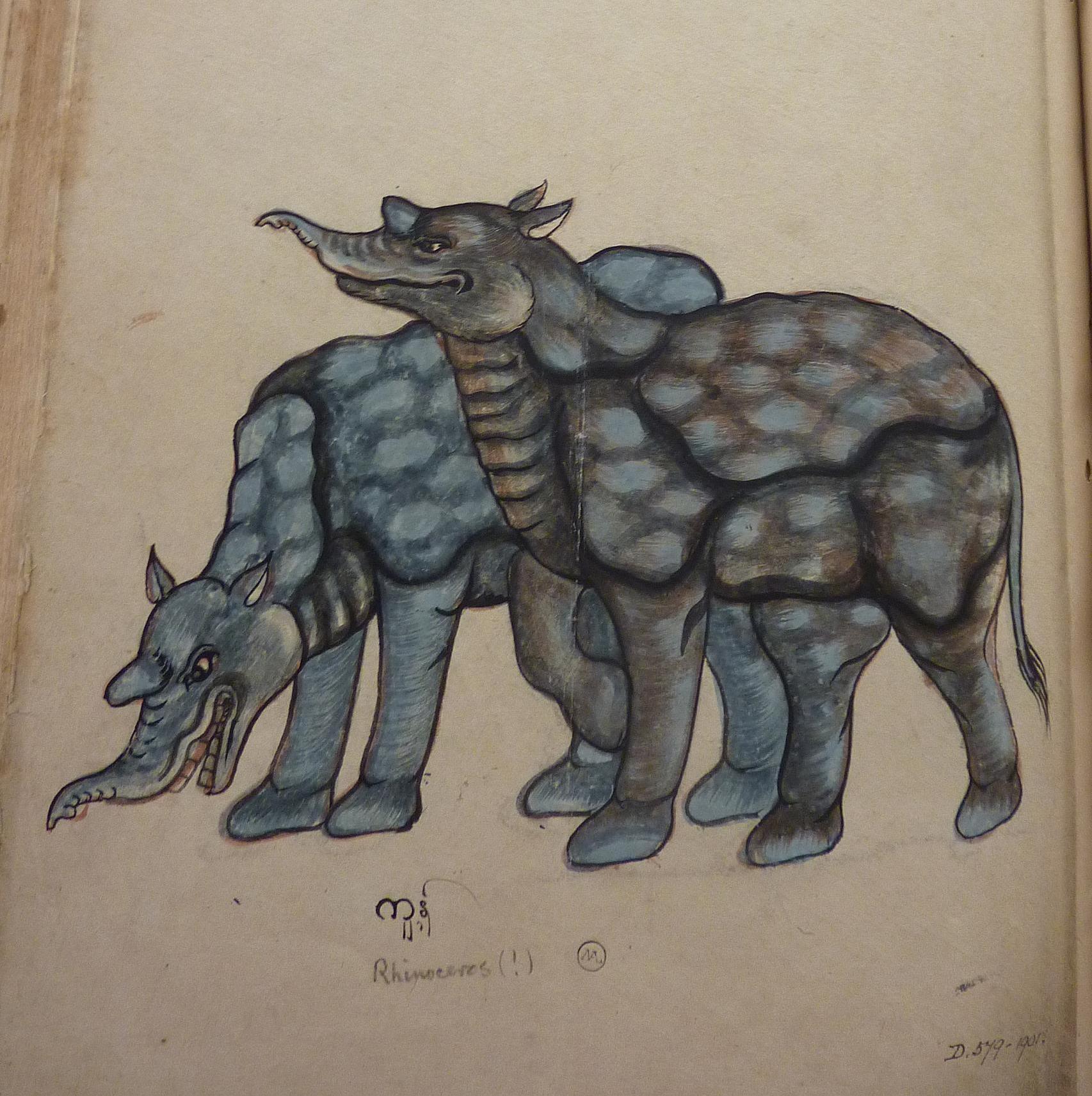 D.579-1901 'Ranaserus' [two rhinoceros]